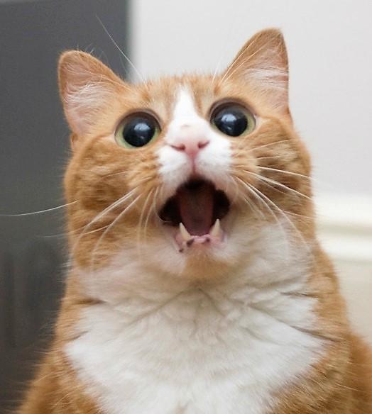 gatto (1).jpg