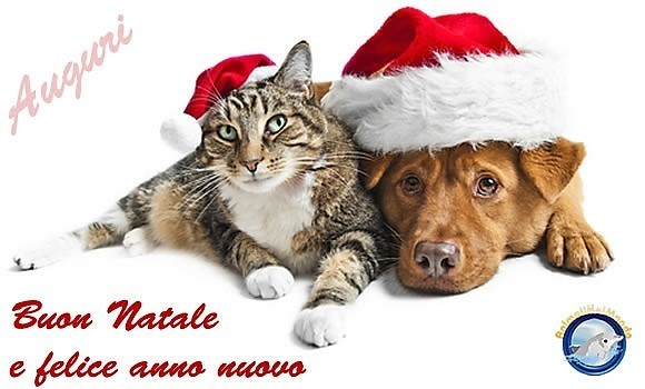 gatto_cane_natale_01.jpg