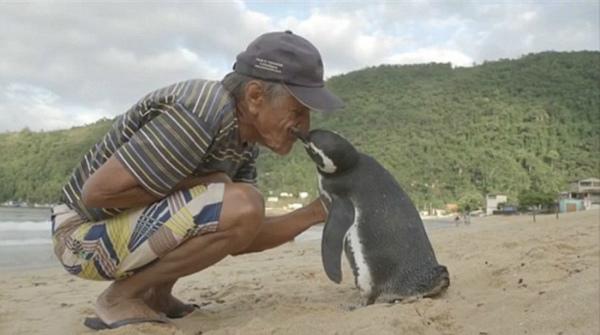 uomo-salva-pinguino-1.jpg