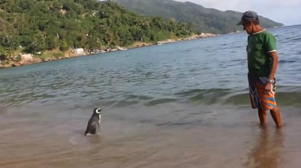 uomo-salva-pinguino-3.jpg